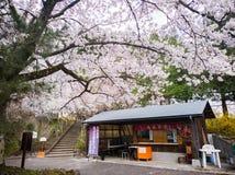 Fukushima, kwiecień 16, 2018: Sklep pod Sakura drzewami, Ote Fotografia Stock