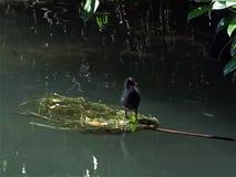 Ful duckling arkivfilmer