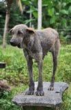Ful hundStand Arkivfoton