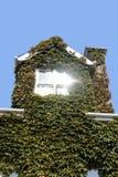 Fulgor de la ventana de la hiedra foto de archivo libre de regalías