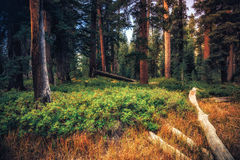 Fulgor na floresta fotografia de stock royalty free