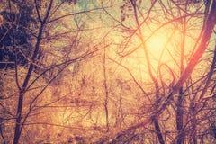 Fulgor retro de Sun após uma tempestade de gelo Fotografia de Stock Royalty Free