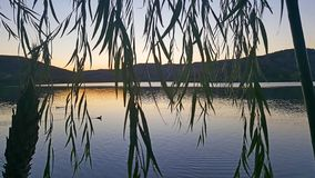 Fulica Atra захода солнца озера Eymir стоковые фотографии rf