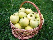 full äpplekorg Royaltyfri Foto