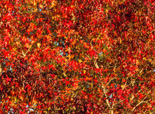 Full Autumn Color Royalty Free Stock Image