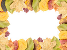 Full autumn leaves frame Stock Image