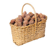 Full basket of cedar cones Stock Photos