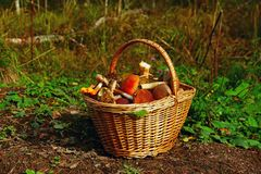 Full basket of mushrooms in the meadow. Basket full of mushrooms to the brim in a clearing in the forest stock image