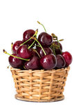 Full basket of red cherries on a stem close up Royalty Free Stock Photo