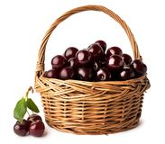 Full basket of ripe red cherries on a white, isolated. royalty free stock image
