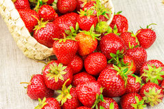 Full basket of strawberries that are poured out on canvas Royalty Free Stock Photo