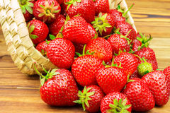Full basket of strawberries that are poured out on table. Full basket of ripe strawberries that are poured out on the wooden table Royalty Free Stock Photos