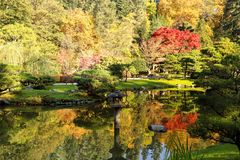 Full of beautiful fall colors at Japanese Garden, Seattle Washin. Beautiful landscape of colorful trees of fall colors at Japanese Garden, Seattle Washington Royalty Free Stock Photo