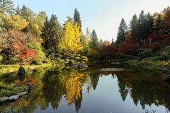 Full of beautiful fall colors at Japanese Garden, Seattle Washin. Beautiful landscape of colorful trees of fall colors at Japanese Garden, Seattle Washington Stock Image