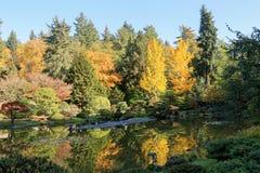 Full of beautiful fall colors at Japanese Garden, Seattle Washington. Beautiful landscape of colorful trees of fall colors at Japanese Garden, Seattle Washington Stock Photography
