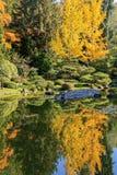 Full of beautiful fall colors at Japanese Garden, Seattle Washington. Beautiful landscape of colorful trees of fall colors at Japanese Garden, Seattle Washington Royalty Free Stock Photography