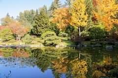 Full of beautiful fall colors at Japanese Garden, Seattle Washington. Beautifully landscaped trees and pond of fall colors at Japanese Garden, Seattle Washington Royalty Free Stock Photo