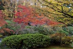 Full of beautiful fall colors at Japanese Garden, Seattle Washington royalty free stock image