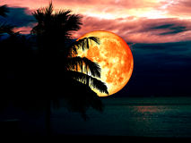 full blood moon dark sky and silhouette coconut tree Royalty Free Stock Images