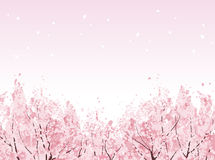Full bloom of beautiful Cherry blossom trees. Beautiful Cherry blossom trees in bloom. File contains Clipping mask, Gradients Royalty Free Stock Photo