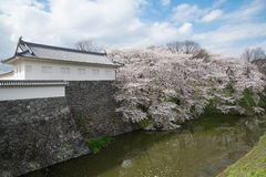 The full bloom Cherry-blossom trees along the Kajo castle moats Stock Image