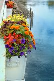 Full Bloom. Of flowers in the flower box on bridge over water Royalty Free Stock Photo