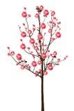 Full bloom red sakura tree Cherry blossom  on white Royalty Free Stock Photos