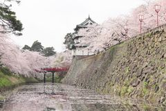 Full bloomed cherry blossoms and  japanese castle Stock Photo
