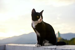 Black and white cat. Full body of black and white cat stock images