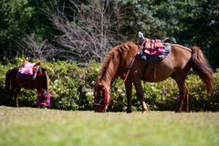 Full body horse in spring pasture Stock Photography