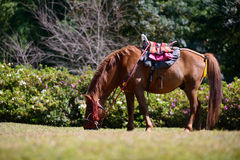 Full body horse in spring pasture Royalty Free Stock Photos
