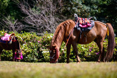 Full body horse in spring pasture Royalty Free Stock Images