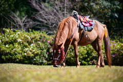Full body horse in spring pasture Royalty Free Stock Image