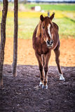 Horse. Full body picture of horse Royalty Free Stock Photo