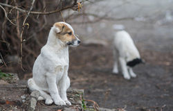 Full body portrait of adorable mixed breed puppy. Thinking about future Stock Photography