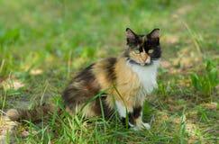 Full body portrait of three colored cat Stock Image