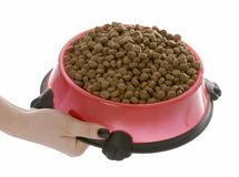 Full bowl of dog food Royalty Free Stock Image