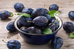 Full bowl of freshly harvested ripe prune fruits on wooden table. Closeup royalty free stock image
