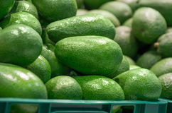 Full box of green Avocado in supermarket Royalty Free Stock Photo