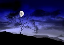 The full bright moon. royalty free stock photography