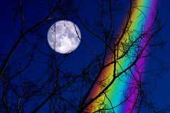 Free Full Buck Moon Back On Silhouette Dry Branch Tree On Night Sky And Rainbow Stock Image - 146317671