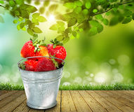 Full bucket of a giant strawberry Royalty Free Stock Photography