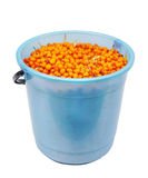 The full bucket of sea-buckthorn berrie Royalty Free Stock Photos