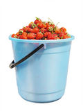 Full bucket of strawberry Stock Photos