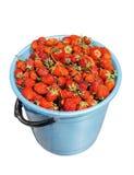 Full bucket of Strawberry Stock Photo