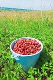 Full bucket of strawberry Royalty Free Stock Photos
