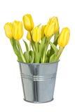 Full bucket of yellow tulips Royalty Free Stock Image