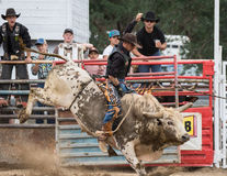 Full of Bull. A cowboy rides a kicking   bull in the rodeo. The rodeo in Cottonwood, California is a popular event on Mother's Day weekend in this small northern Royalty Free Stock Images