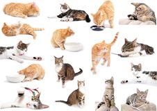Full of cats. A young cat focus at something Stock Photography
