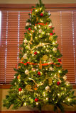 Full Christmas Tree in Front of Blinds Royalty Free Stock Photo